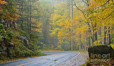Yellow Fall Roadside Scenic Poster