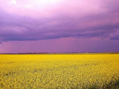 Yellow Field Purple Sky Poster by Cathy Long