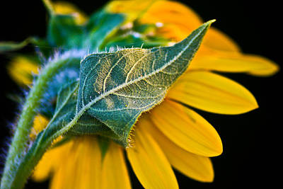 Yellow Flower Poster by Mark Alder