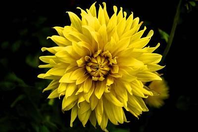 Poster featuring the photograph Yellow Flower by Matt Harang