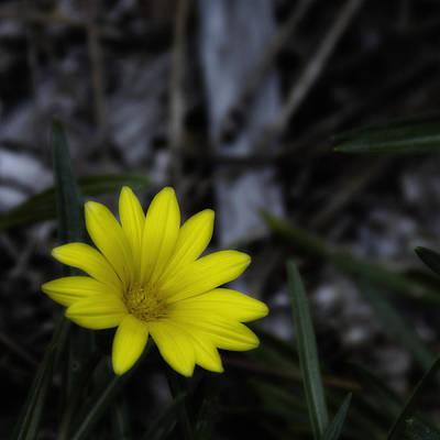 Yellow Flower Soft Focus Poster