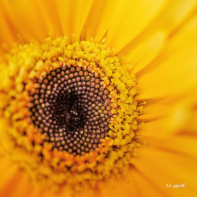 Poster featuring the photograph Yellow Gerbera Squared by TK Goforth
