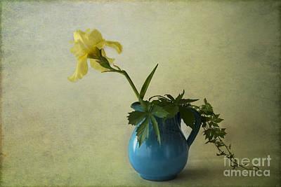 Yellow Iris Poster by Elena Nosyreva