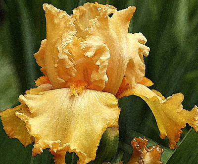 Poster featuring the photograph Yellow Iris by Susan Crossman Buscho