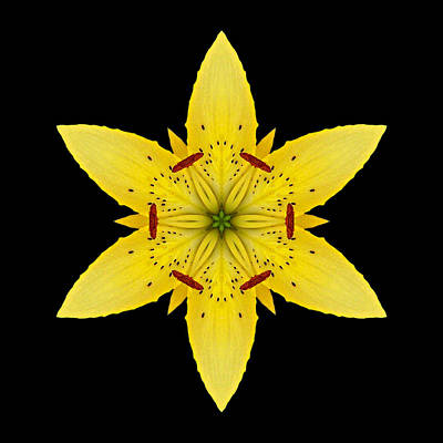 Yellow Lily I Flower Mandala Poster