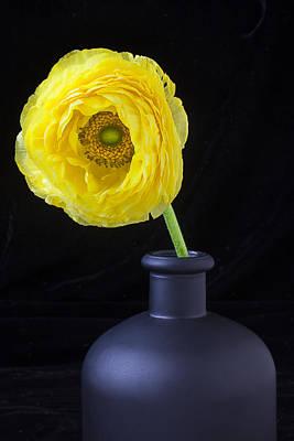 Yellow Ranunculus In Black Vase Poster by Garry Gay