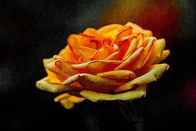 Yellow Rose 1 Poster by Alexander Senin