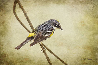 Yellow-rumped Warbler 2 Poster by Jeff Swanson
