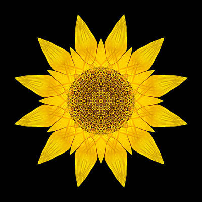 Yellow Sunflower X Flower Mandala Poster