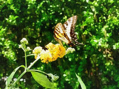 Yellow Swallowtail On Yellow Lantana Poster by Susan Savad