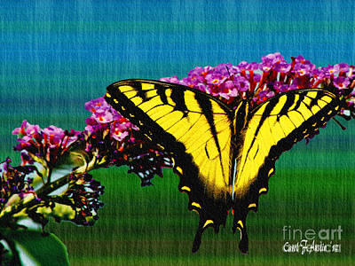 Yellow Swallowtail Butterfly Poster by Carol F Austin
