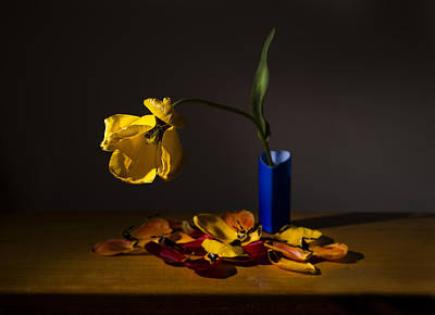 Yellow Tulip Poster by Ivan Vukelic