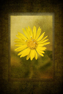 Yellow Wildflower Poster