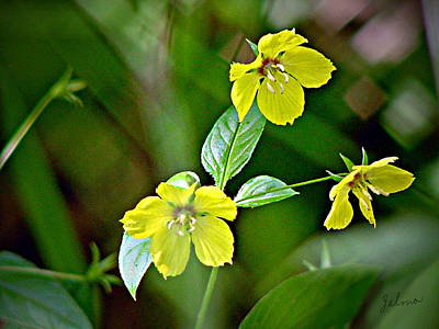 Yellow Wildflowers Poster by Zelma Hensel