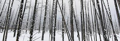 Yellowstone Bobby Sox Trees Poster