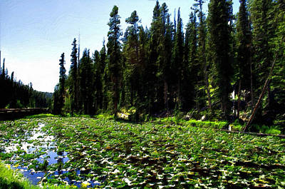 Yellowstone Lily Pads  Poster