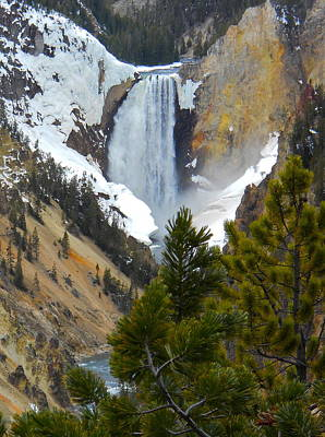 Poster featuring the photograph Yellowstone Lower Falls In Spring by Michele Myers