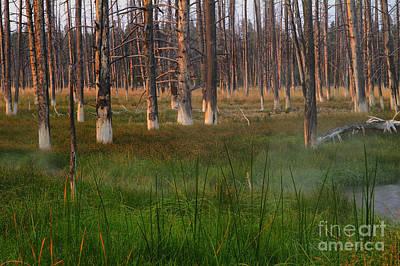 Yellowstone Mysterious Morning Poster by Teresa Zieba