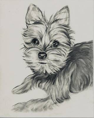 'yorkie' Poster by Barb Baker