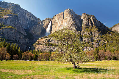 Yosemite Meadow With Tree Poster by Jane Rix