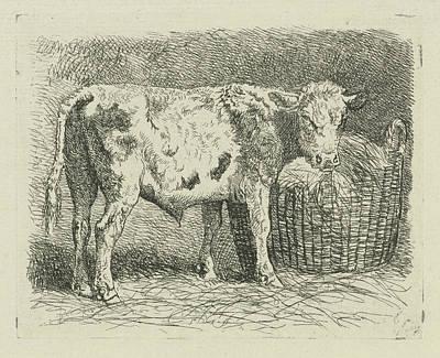 Young Bull, Dirk Van Lokhorst Poster by Dirk Van Lokhorst