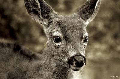Young Curious Deer Poster