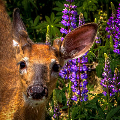 Young Deer On The Hillside Poster
