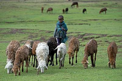 Young Shepherd Near Debarq Poster