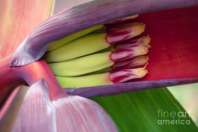 Your Treasure - Mai'a Maoli - Tropical Hawaiian Banana Flower  Poster by Sharon Mau