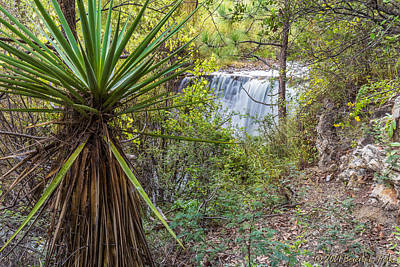 Poster featuring the photograph Yucca And Waterfall by Beverly Parks