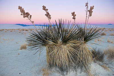 Yucca Dawn Poster