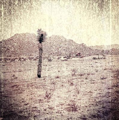 Yucca Tree In Desert Poster by Yo Pedro