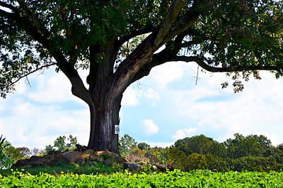 Yum Yum Tree Poster