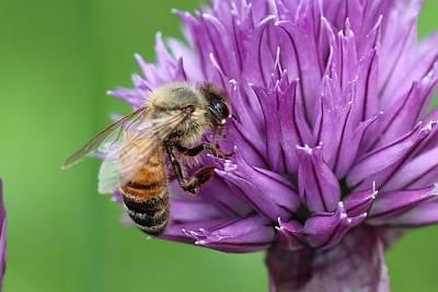 Yummm Chive Nectar Poster