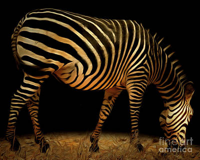 Zebra 20150210brun Poster by Wingsdomain Art and Photography