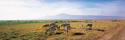 Zebra Amboseli Kenya Poster by Panoramic Images