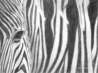 Poster featuring the drawing Zebra by Denise Deiloh