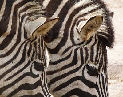 Zebra Double Poster