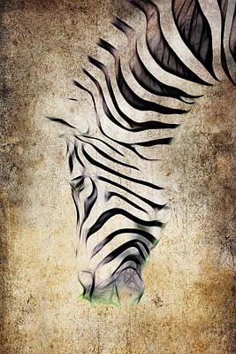 Zebra Fade Poster