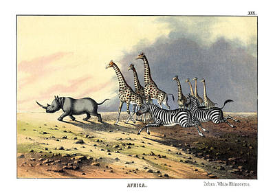 Zebra Giraffe White Rhinoceros Poster by Splendid Art Prints
