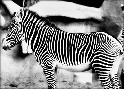 Poster featuring the photograph Zebra by Kristine Merc