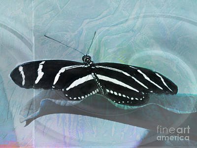Zebra Longwing Textured Butterfly Poster