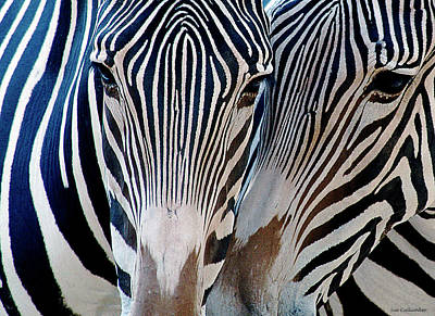 Zebra Pattern Poster by Sue Cullumber