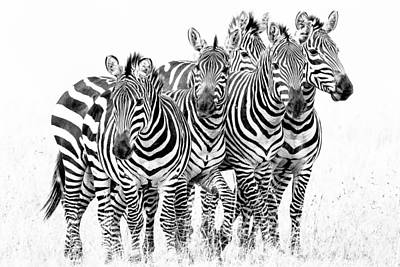 Poster featuring the photograph Zebra Quintet by Mike Gaudaur