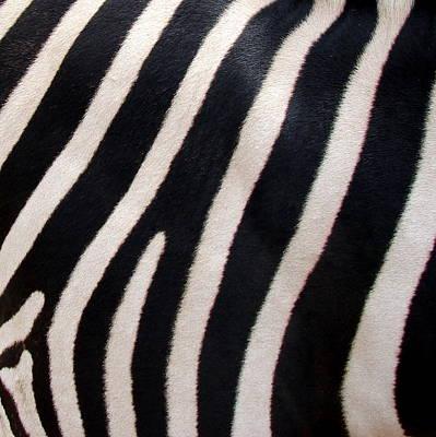 Zebra Stripes Poster by Ramona Johnston