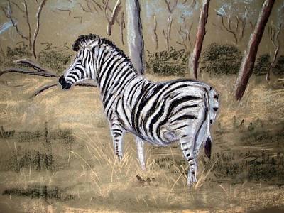 Zebra Poster by Tony Gunning