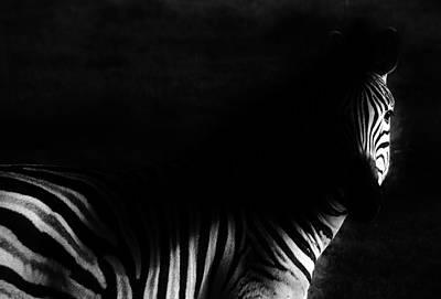 Zebra Poster by Werner Lehmann