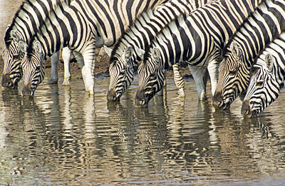 Poster featuring the photograph Zebras At Water Hole by Dennis Cox WorldViews