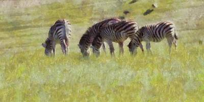 Zebras In Africa Poster by Dan Sproul