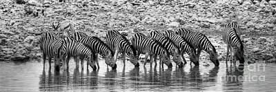 Poster featuring the photograph Zebras On A Waterhole by Juergen Klust